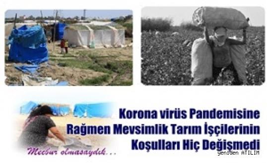 Korona virüs Pandemisine Rağmen Mevsimlik Tarım İşçilerinin Koşulları Hiç Değişmedi